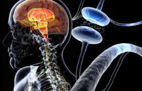 Красноярские ученые смогут излечить болезнь Паркинсона и Альцгеймера