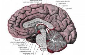 Даже легкие сотрясения вредны для мозга