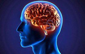 Введение стволовых клеток поможет избежать последствий инсульта