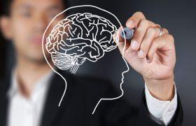 Защита мозга имеет ограниченный «срок годности», заявляют неврологи