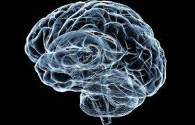 Ученые выяснили, как формируется наша память