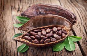 Какао: лекарство для головного мозга
