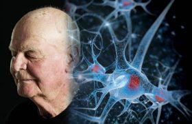 Физкультура может остановить старение мозга