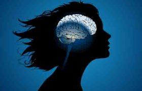 Половое влечение зависит от устройства мозга