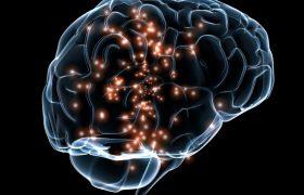 Отношение к другому влияет на активность мозга
