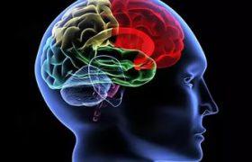 Сила удара зависит от особенностей мозга