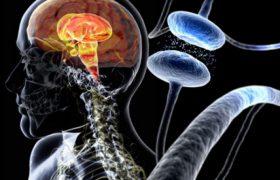 Работа ночью защищает от болезни Паркинсона