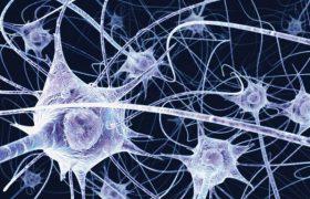 Мозг способен к самостоятельной регенерации нейронов