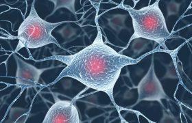 Иммунная система влияет на клетки мозга