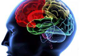 Нейрофизиологи раскрыли источник неизлечимых заболеваний мозга