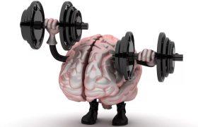Умственные способности зависят от массы мозга