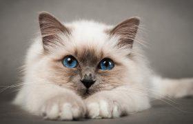 Кошки помогут справиться с депрессией и последствиями инсульта