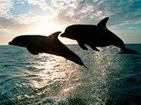 Гены дельфинов подскажут, как предотвратить инсульт и почечную недостаточность у людей