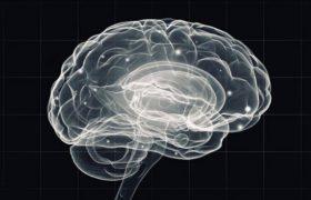 Крошечная структура в мозге помогает нам понять других людей