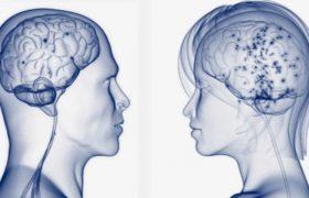 Женский мозг лучше запоминает информацию, чем мужской