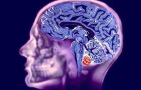 МРТ головного мозга выявляет дислексию