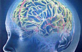 При сканировании головного мозга можно предсказать желания и действия человека