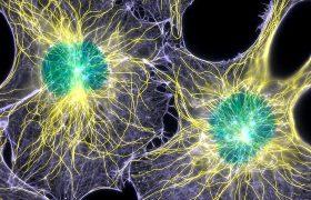 Стволовые клетки для восстановления после инсульта