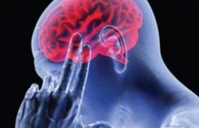 Здоровый образ жизни улучшает работу мозга