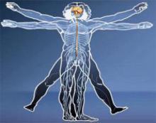 Даже одна клетка мозга способна хранить воспоминания