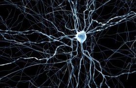 Почему ткань периферических нервов и мозга восстанавливается по-разному?