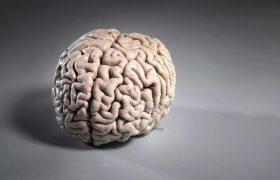 Больше мозга, больше удовольствия