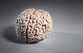 Найдена генная подсказка к 130 заболеваниям мозга