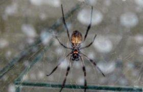 Австрийские ученые предложили способ лечить нервы паутиной