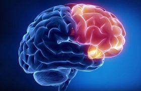 Простое природное средство мощно против рака мозга