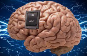 Ученые обнаружили в мозге «переключатель» с накопления жира на сжигание