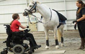 Восстановлению после инсульта помогают… лошади
