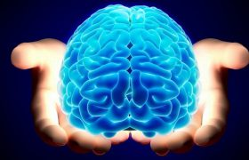 Найдены новые пути проникновения грибка в мозг