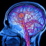 Здоровый образ жизни позволяет укрепить здоровье мозга и предотвратить слабоумие