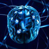 Некоторые части мозга начинают работать после 40 лет