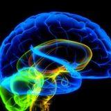 Неврологи критикуют проект Human Brain