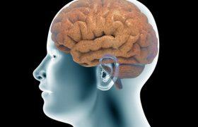 Предложен новый метод диагностики заболеваний мозга