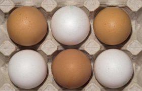Куриные яйца помогают младенцам развивать мозг