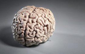 Ученые научились улучшать память людей