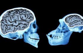 Мозг человека увеличился в три раза за последние 3 млн лет