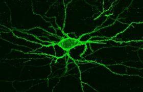 Электрическую активность мозга теперь можно увидеть напрямую
