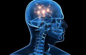 Зачем я выращиваю второй мозг