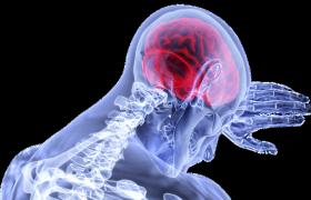 Истощение мозга продлевает жизнь