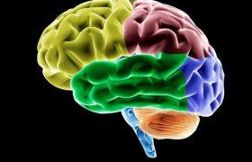 Сидячий образ жизни быстро приближает потерю памяти