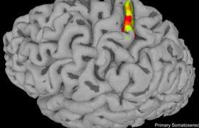 Новая технология стимуляции мозга помогает безнадежно парализованным