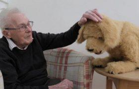 Собаки-роботы помогают жертвам старческого слабоумия