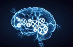 Интересные и неожиданные факты о мозге