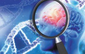 Ученые смогли заглушить ген, вызывающий старческое слабоумие