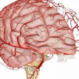 Разработан уникальный биоматериал для лечения заболеваний мозга