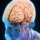 Найдена молекула, способная улучшить память