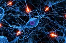Найден механизм, который остановит разрушение клеток мозга